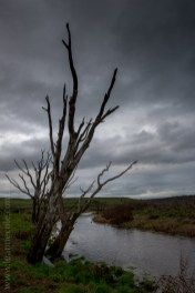 cairncurran-reservoir-rail-bridge-victoria-9756