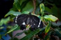 melbourne-zoo-butterflies-fujifilm-xt20-2272