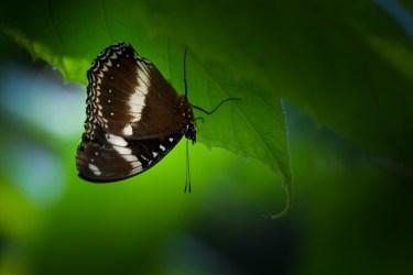 melbourne-zoo-butterflies-fujifilm-xt20-2296