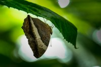 melbourne-zoo-butterflies-fujifilm-xt20-2321