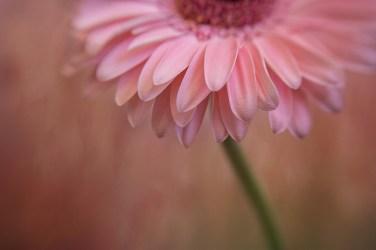 Kathleen Clemons macro photography