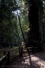 henry-cowell-redwoods-santacruz-mountains-4478
