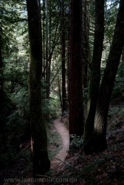 henry-cowell-redwoods-santacruz-mountains-4568