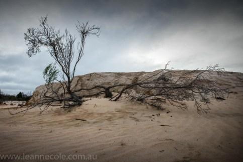 lake-albacutya-sand-dunes-8