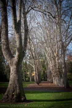 leannecole-melbourne-fitzroygardens-20140611-1203