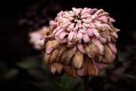 alowyn-gardens-decay-macro-flower