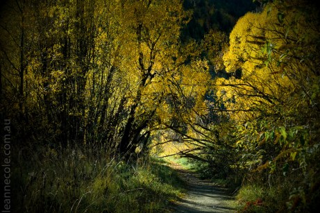 arrowtown-autumn-leaves-historic-newzealand-3050