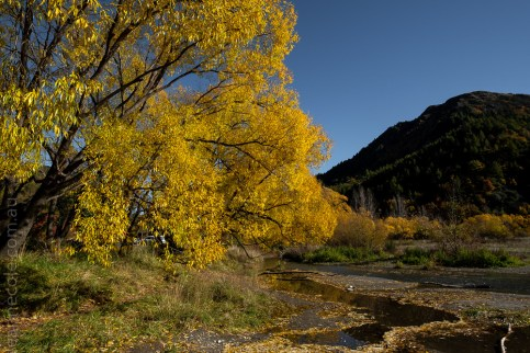 arrowtown-autumn-leaves-historic-newzealand-9727