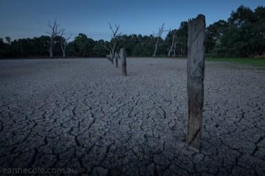 banyule-flats-swamp-dry-autumn-3202