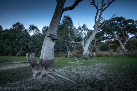 banyule-flats-swamp-dry-autumn-3220