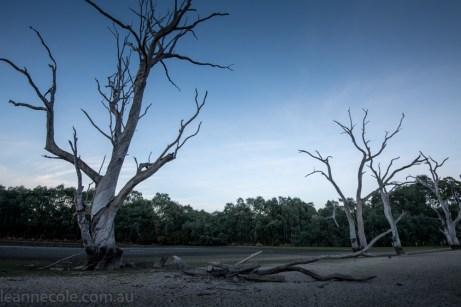banyule-flats-swamp-dry-autumn-3239