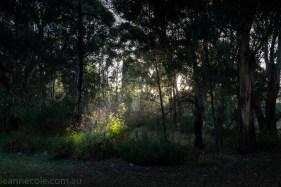 banyule-flats-swamp-dry-autumn-3283