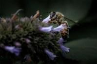 bee-alowyngardens-dead-seasons-1631