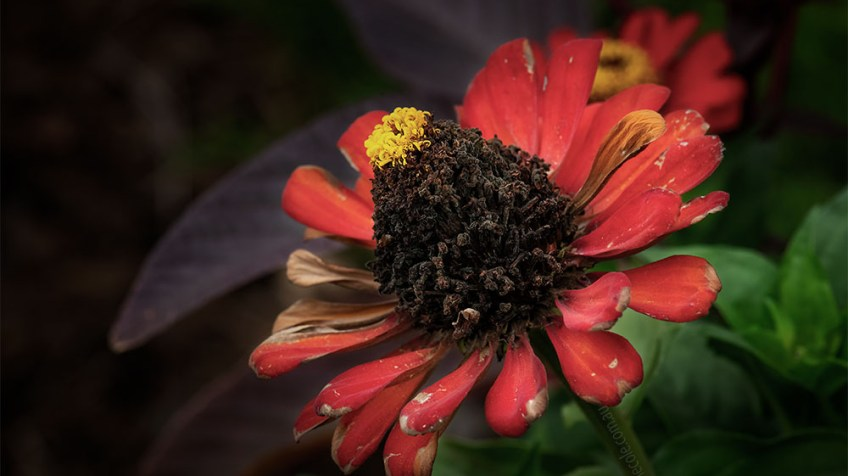 flower-alowyngardens-dead-seasons-1631
