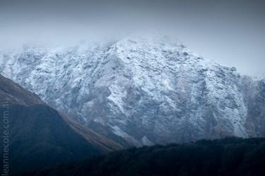 glacierlake-tours-boat-lake-rainforest-2682
