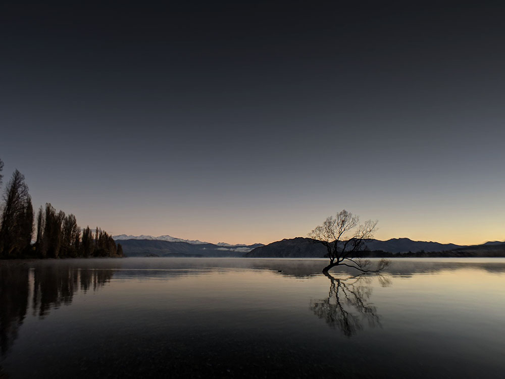 struman-cinematic-wanaka-tree-newzealand