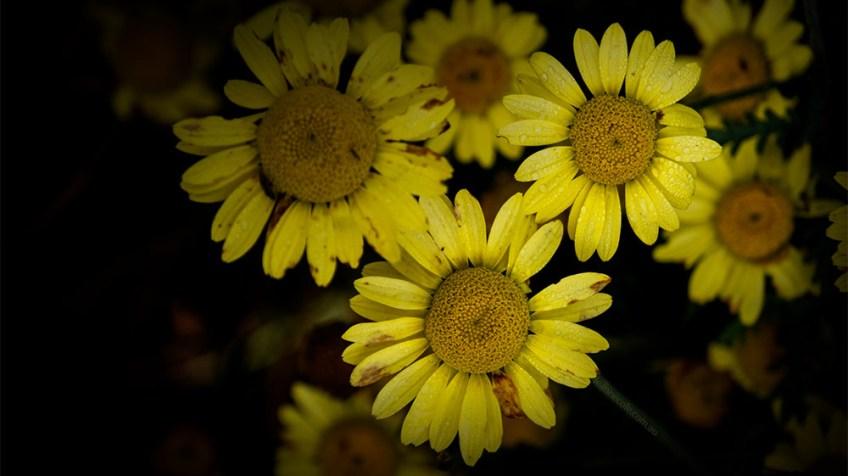 flowers-dunedin-newzealand-botanical-gardens