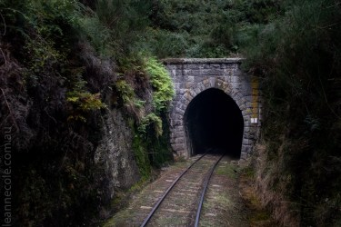 train-taieri-gorge-dunedin-newzealand-1569