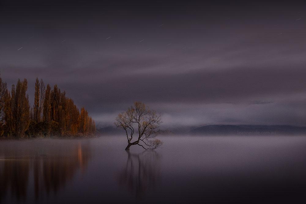 wanaka-tree-misty-morning-newzealand-9759