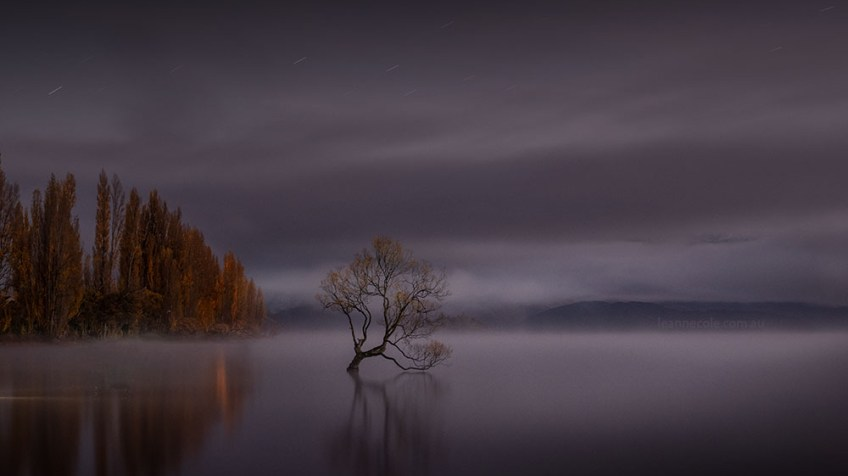 wanaka-tree-misty-morning-newzealand-9759
