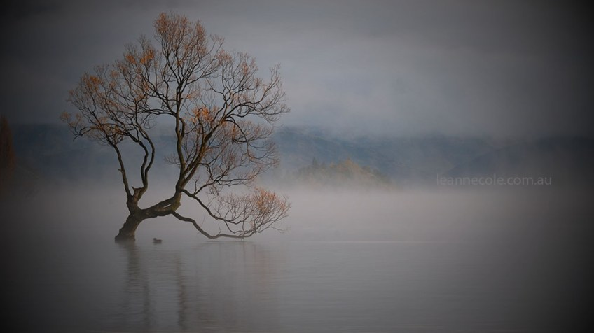wanaka-tree-misty-morning-newzealand-9799