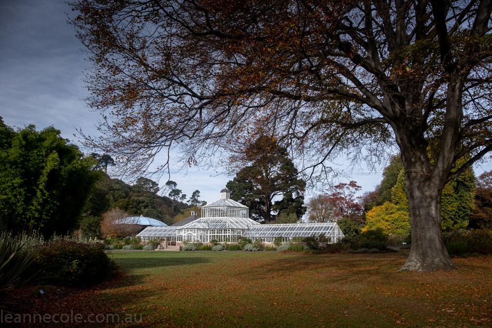 New Zealand Wanderings - Dunedin Botanical Gardens