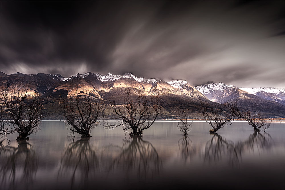 More trees at Glenorcy, New Zealand