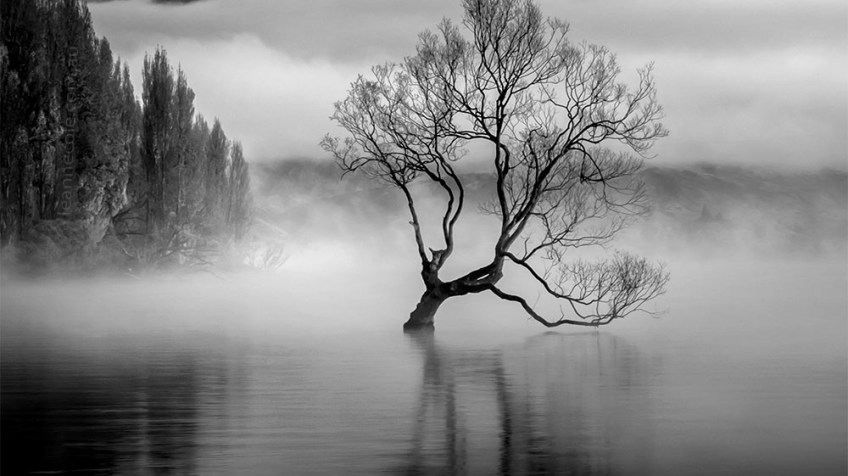Monochrome Wednesday - That Tree
