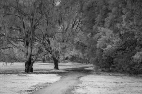 Weekend Wanderings - Infrared in the park