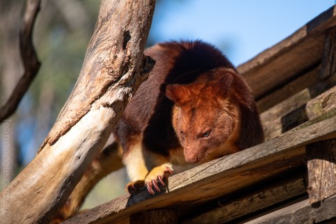 Weekend Wanderings - Animals at Healesville Sanctuary