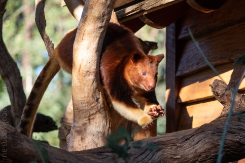 Weekend Wanderings - Animals at Healesville Sanctuary