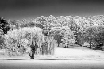 Silent Sunday - Port Arthur in Infrared
