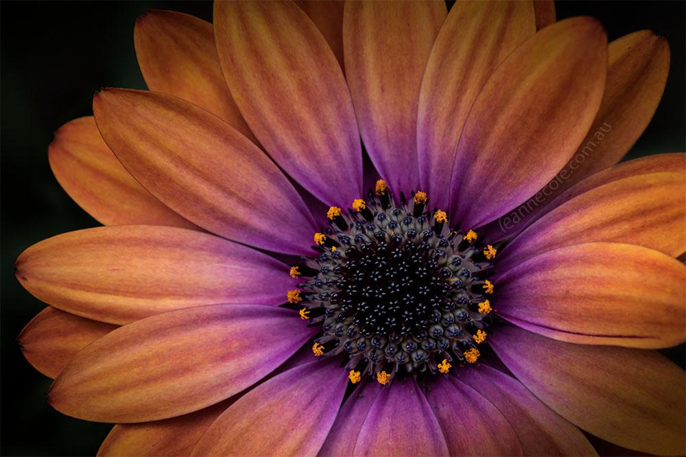 Floral Friday - Locked in my garden