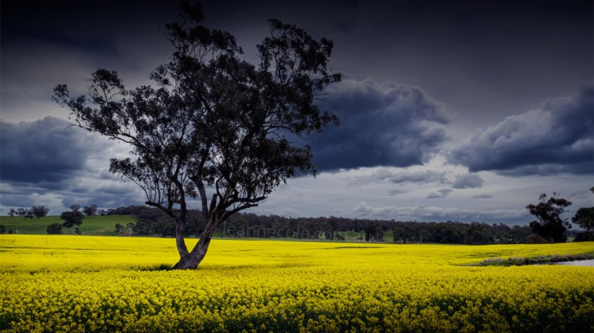 The Canola is out, but it isn't public