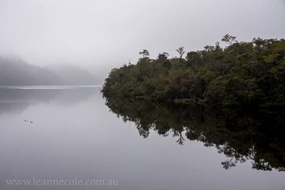 Silent Sunday - Boat cruise on the Gordon River