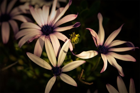 mums-garden-flowers-macro-australia