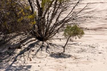 Reposting Weekend Wanderings: Big Desert