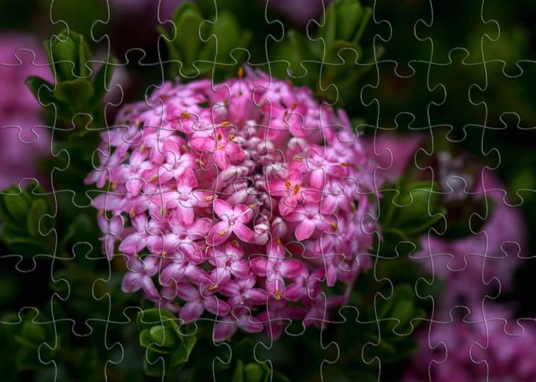 Silent Sunday - Native Flower Jigsaws