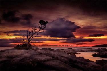 tree-rocks-binalongbay-sunrise-tasmania