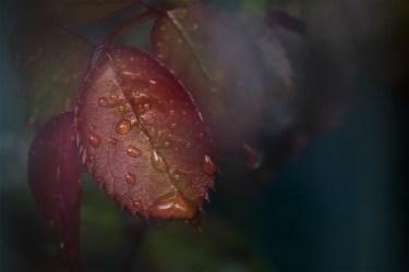 leannecole-alowyn-gardens-macro-class-4