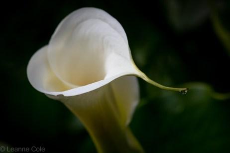 4-garden-winter-flowers