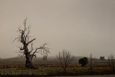 bonnie-doon-fog-winter-1032