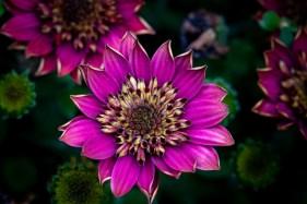 home-macro-flower-photograhy-1689