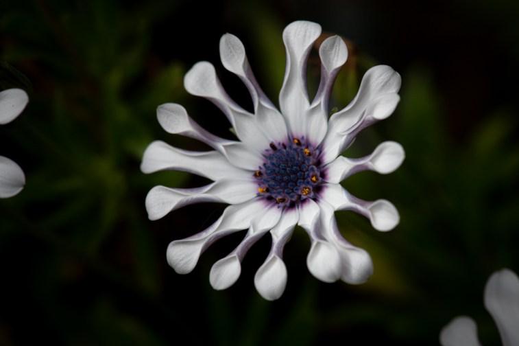 home-macro-flower-photograhy-1735