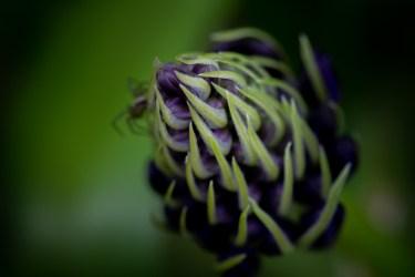 home-macro-flower-photograhy-1757