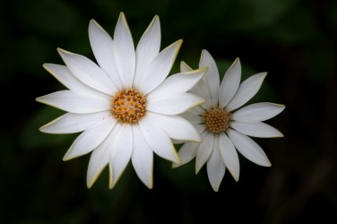 home-macro-flower-photograhy-1827
