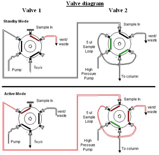 Roney Tattoo: heart diagram valves