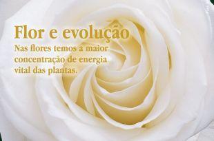 Flor e evolução