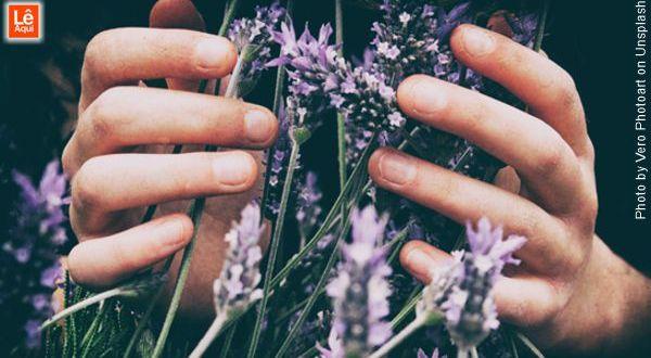 mãos segurando um maço de flores de lavanda que é um dos principais óleos essenciais
