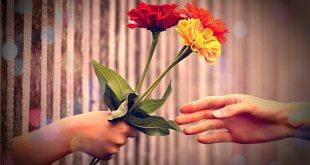 Mão dando 3 flores para outra mão mostrando que é uma gentileza: um pequeno gesto
